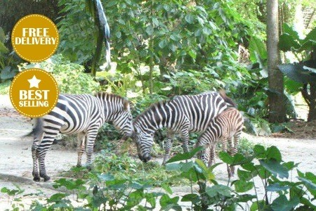 $23.80 for Singapore Zoo Admission Ticket + Tram Ride @ Groupon -  <img src=